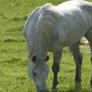 Horse resive
