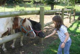 istock horse1resize