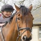 istock horse3 resize