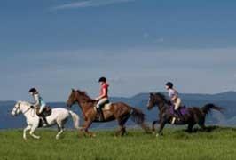 killarney-riding-stables