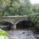kilmacurragh-arboretum