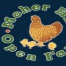 moher-hill-open-farm