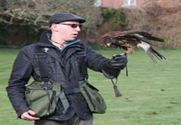 """Wells House & Gardens Falconry"""