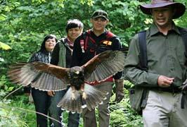 """Bird Of Prey Hawk Walk at Aillwee Caves"""