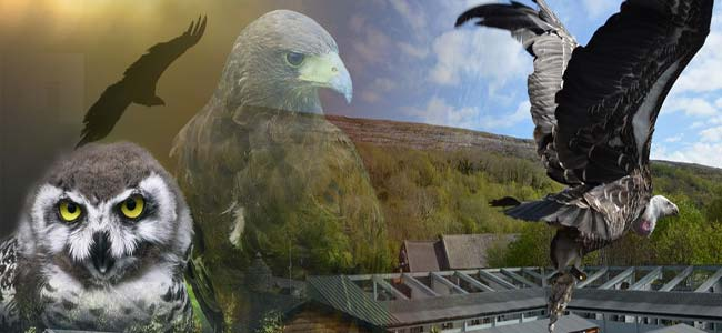 """""""Burren Birds Of Prey Centre at Aillwee Cave in Clare"""""""