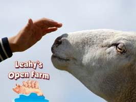 """""""Leahys Open Farm In Cork"""""""