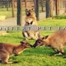 """""""Clonfert Pet Farm"""""""