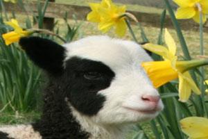 """Easter Hunt At Glendeer Pet Farm"""