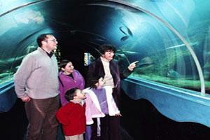 """""""Dingle Oceanworld Aquarium for Family Fun"""""""