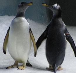 """Penguin Exhibition enclosure"""