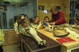 """Zoological Museum Dublin"""