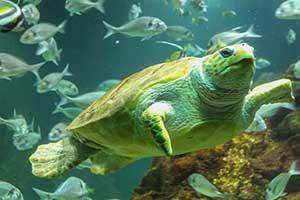 """""""Aquarium in Dingle"""""""
