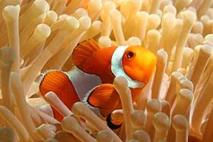"""""""Dingle Oceanworld Aquarium School Tours"""""""