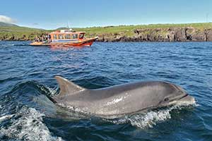 """Dingle Skellig Hotel For Families in Kerry"""