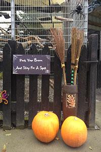 """Halloween in Glendeer Pet Farm"""
