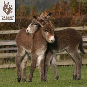 """The Donkey Sanctuary"""