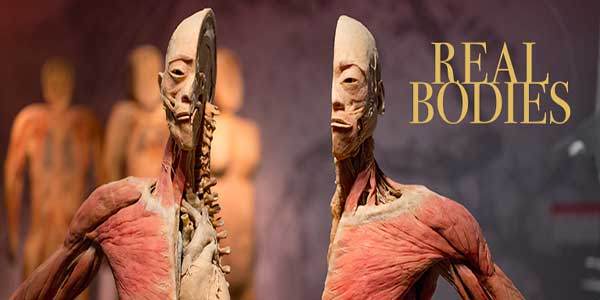 """Real Bodies Exhibition at The Ambassador Theatre"""
