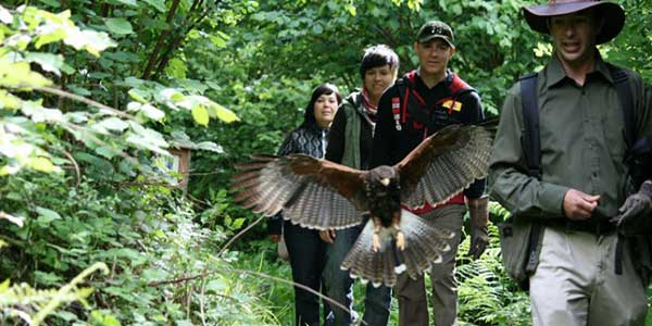 """""""Aillwee Cave Walk with a Hawk"""""""