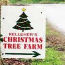 """Kelleher's Christmas Trees"""