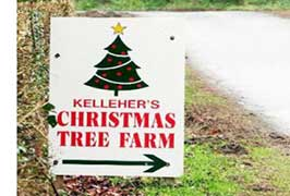 """Kelleher's Christmas Trees"""