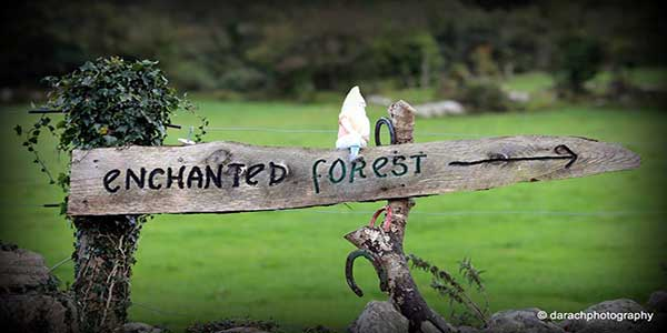 """""""The Slieve Aughty Enchanted Forest Experience"""""""