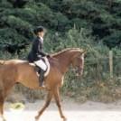 carrickmines equestrain resize