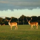 DeerparkR