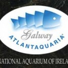 national-aquarium-galway