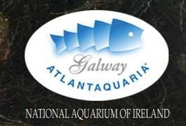 national-aquarium-galway