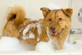Waggy Tails Dog Grooming Tipperary