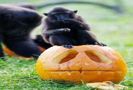 Halloween Spooktacular Dublin Zoo