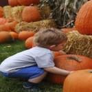Rathwood Halloween Pumpkin Train