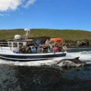 """Dingle Dolphin Boat Trips"""