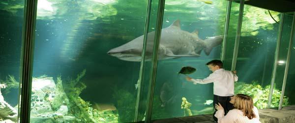 """""""Dingle Oceanworld Aquarium Kerry"""""""