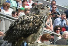 """Birds Of Prey Centre in Co. Clare"""