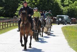 Dartfield Horse Museum Amp Heritage Centre Galway