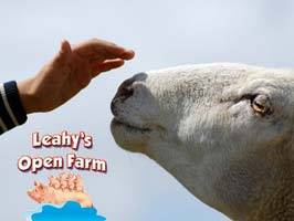 """Leahys Open Farm In Cork"""
