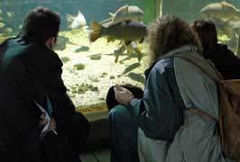 """""""Galway Aquarium Family Admission"""""""