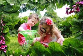 """""""Bug Festival - Millstreet Country Park"""""""