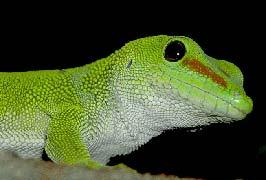 """Reptile Village Family Attraction Kilkenny"""