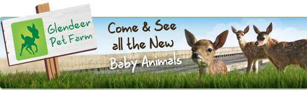 """Glendeer Pet Farm in Athlone"""