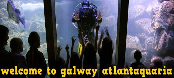 """""""Galway Aquarium is the National Aquarium Of Ireland"""""""