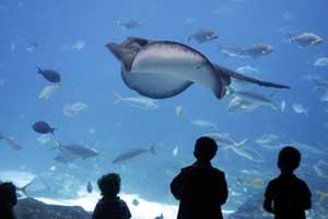 """""""Galway Aquarium"""""""