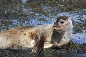"""Seafari Seal-Watching Cruises in Kenmare, Kerry"""