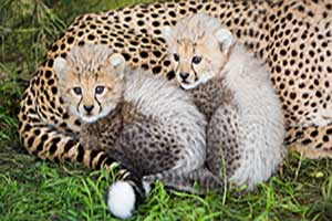 """Fota Wildlife Park"""