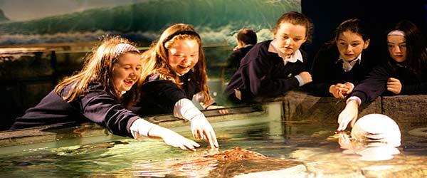 """""""School Tours at Dingle Oceanworld Aquarium"""""""