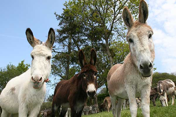 """The Donkey Sanctuary in Cork"""