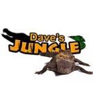 """""""Dave's Jungle"""""""