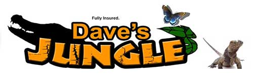 """Dave's Jungle Party"""