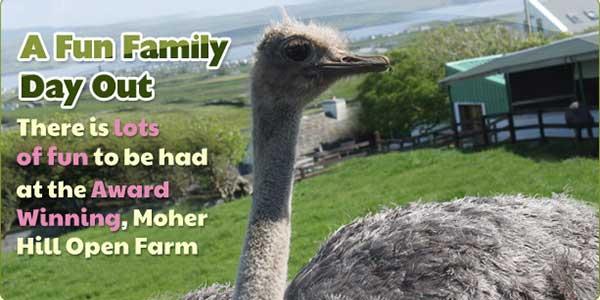 """Moher Hill Open Farm in Clare"""